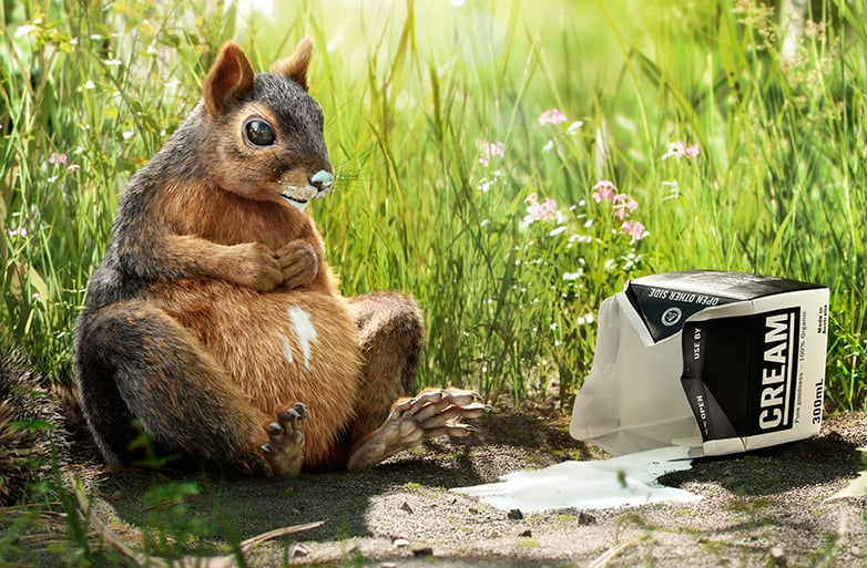 6331_Squirrel_Outdoor